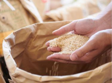 お米屋さんで「米」を買う